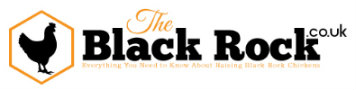 All About the Black Rock Chicken – TheBlackRock.co.uk -